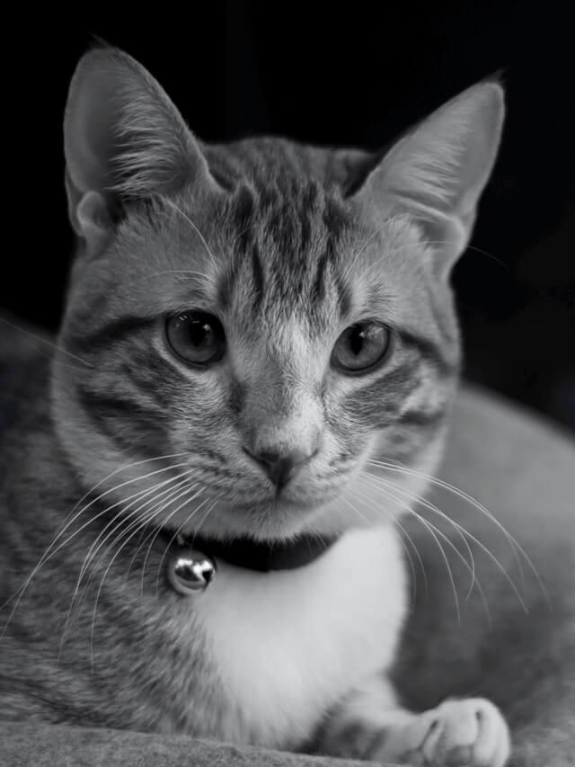 猫の背景画像