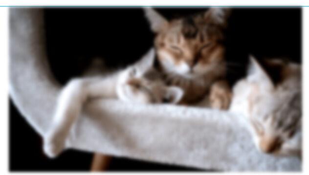 elementor-image-widget-blur-effect